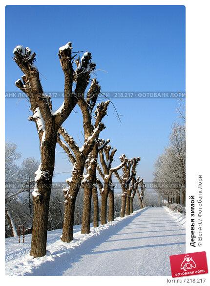 Деревья зимой, фото № 218217, снято 26 июля 2017 г. (c) ElenArt / Фотобанк Лори