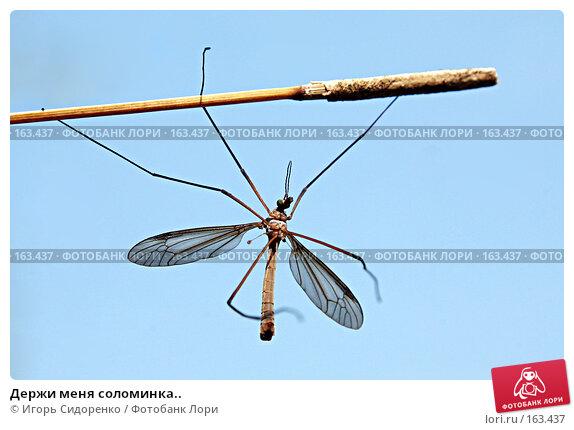 Держи меня соломинка.., фото № 163437, снято 20 августа 2007 г. (c) Игорь Сидоренко / Фотобанк Лори