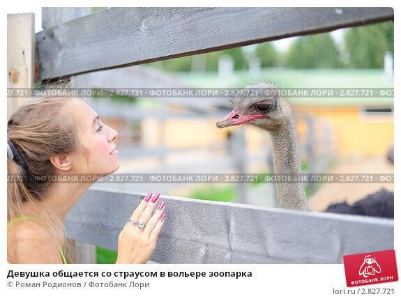Купить «Девушка общается со страусом в вольере зоопарка», фото № 2827721, снято 21 августа 2011 г. (c) Роман Родионов / Фотобанк Лори