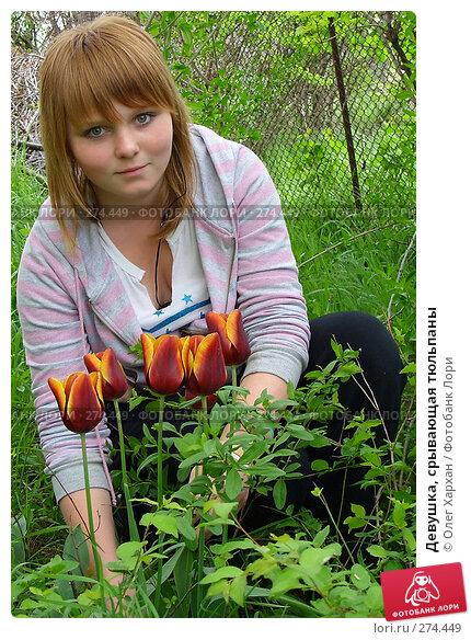 Девушка, срывающая тюльпаны, фото № 274449, снято 25 апреля 2008 г. (c) Олег Хархан / Фотобанк Лори