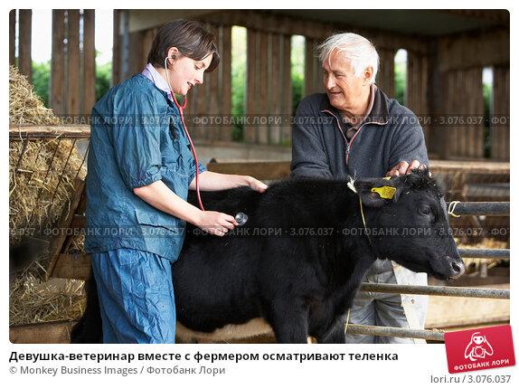 Купить «Девушка-ветеринар вместе с фермером осматривают теленка», фото № 3076037, снято 27 сентября 2007 г. (c) Monkey Business Images / Фотобанк Лори