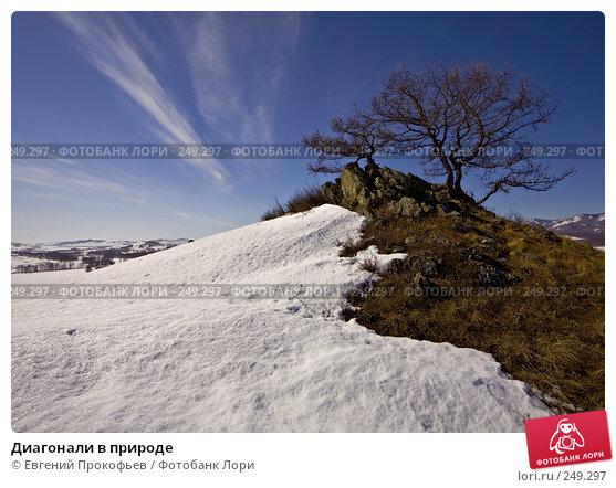 Диагонали в природе, фото № 249297, снято 1 апреля 2007 г. (c) Евгений Прокофьев / Фотобанк Лори