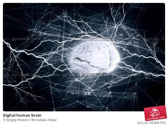 Купить «Digital human brain», иллюстрация № 18093573 (c) Sergey Nivens / Фотобанк Лори