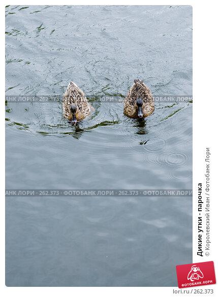 Купить «Дикие утки - парочка», фото № 262373, снято 20 апреля 2008 г. (c) Королевский Иван / Фотобанк Лори