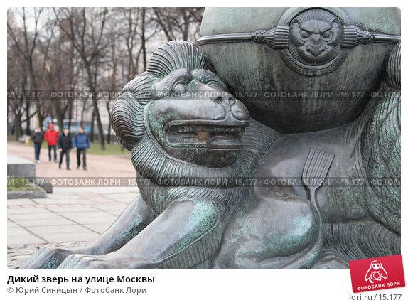 Дикий зверь на улице Москвы, фото № 15177, снято 16 декабря 2006 г. (c) Юрий Синицын / Фотобанк Лори
