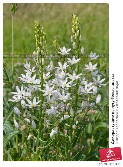 Купить «Дикорастущие на лугу белые цветы», фото № 313433, снято 4 июня 2008 г. (c) Федор Королевский / Фотобанк Лори