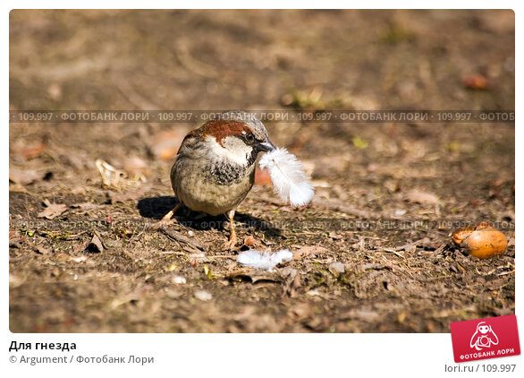 Купить «Для гнезда», фото № 109997, снято 30 марта 2007 г. (c) Argument / Фотобанк Лори
