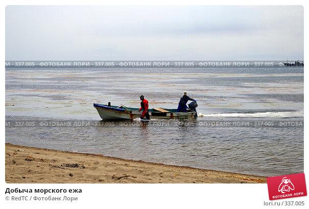 Купить «Добыча морского ежа», фото № 337005, снято 25 июня 2008 г. (c) RedTC / Фотобанк Лори