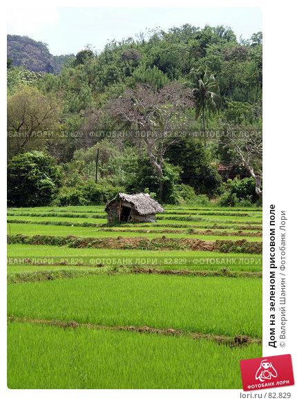 Дом на зеленом рисовом поле, фото № 82829, снято 13 июня 2007 г. (c) Валерий Шанин / Фотобанк Лори
