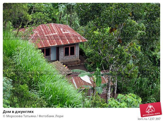 Купить «Дом в джунглях», фото № 237397, снято 24 февраля 2008 г. (c) Морозова Татьяна / Фотобанк Лори