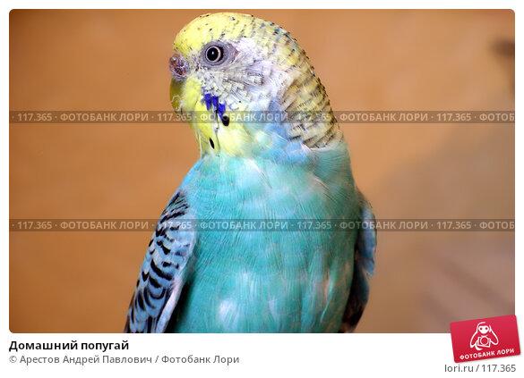 Купить «Домашний попугай», фото № 117365, снято 29 октября 2006 г. (c) Арестов Андрей Павлович / Фотобанк Лори