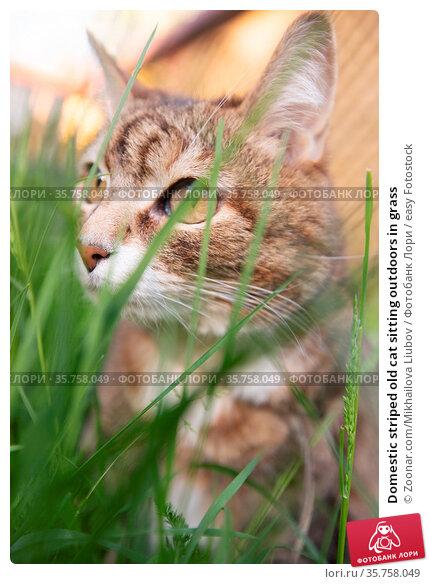 Domestic striped old cat sitting outdoors in grass. Стоковое фото, фотограф Zoonar.com/Mikhailova Liubov / easy Fotostock / Фотобанк Лори