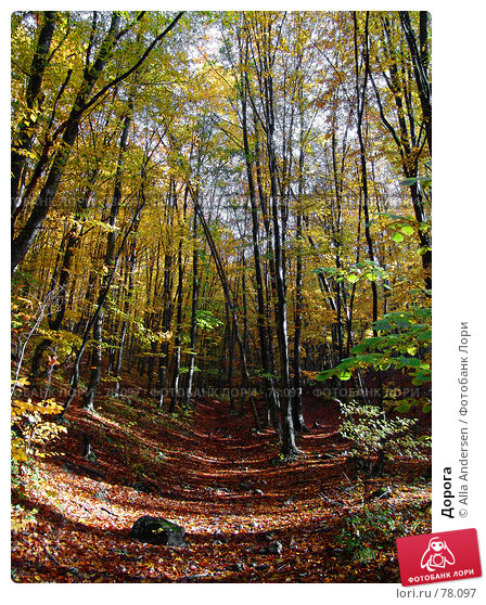 Дорога, фото № 78097, снято 27 октября 2006 г. (c) Alla Andersen / Фотобанк Лори