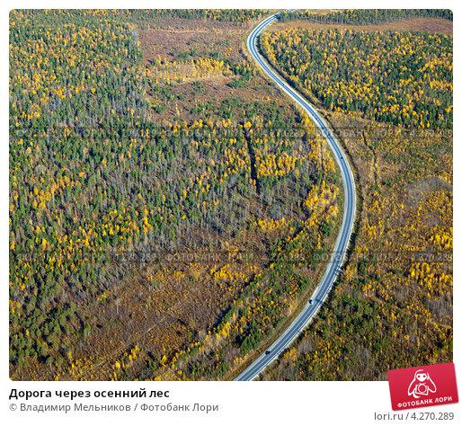 Дорога через осенний лес, фото № 4270289, снято 15 сентября 2011 г. (c) Владимир Мельников / Фотобанк Лори