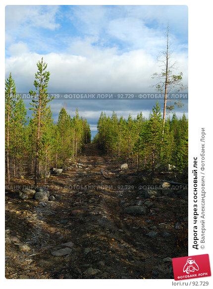 Дорога через сосновый лес, фото № 92729, снято 3 октября 2007 г. (c) Валерий Александрович / Фотобанк Лори