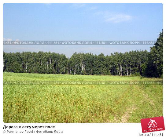 Дорога к лесу через поле, фото № 111481, снято 22 августа 2004 г. (c) Parmenov Pavel / Фотобанк Лори