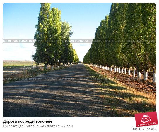 Дорога посреди тополей, фото № 158849, снято 11 сентября 2007 г. (c) Александр Литовченко / Фотобанк Лори
