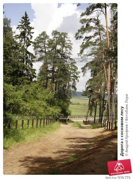 Купить «Дорога с сосновом лесу», фото № 519773, снято 5 июля 2008 г. (c) Андрей Ерофеев / Фотобанк Лори