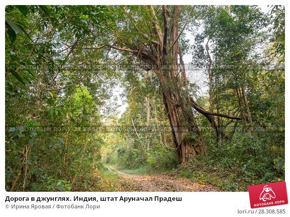 Купить «Дорога в джунглях. Индия, штат Аруначал Прадеш», фото № 28308585, снято 21 марта 2018 г. (c) Ирина Яровая / Фотобанк Лори