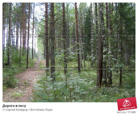 Дорога в лесу, фото № 17945, снято 23 июля 2006 г. (c) Сергей Ксейдор / Фотобанк Лори