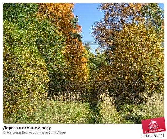 Купить «Дорога в осеннем лесу», эксклюзивное фото № 93121, снято 30 сентября 2007 г. (c) Наталья Волкова / Фотобанк Лори
