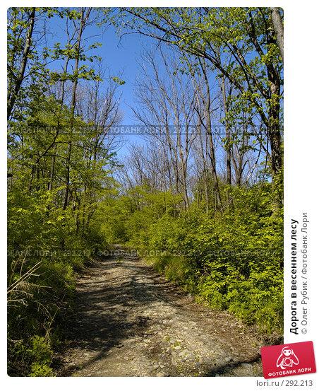 Дорога в весеннем лесу, фото № 292213, снято 14 мая 2008 г. (c) Олег Рубик / Фотобанк Лори