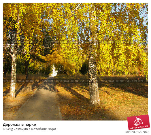 Купить «Дорожка в парке», фото № 129989, снято 1 октября 2005 г. (c) Serg Zastavkin / Фотобанк Лори