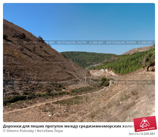 Дорожки для пеших прогулок между средиземноморских холмов. Стоковое фото, фотограф Shlomo Polonsky / Фотобанк Лори