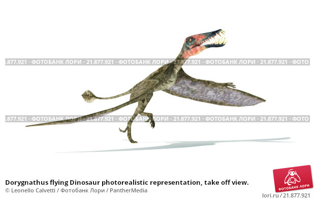 Купить «Dorygnathus flying Dinosaur photorealistic representation, take off view.», иллюстрация № 21877921 (c) PantherMedia / Фотобанк Лори