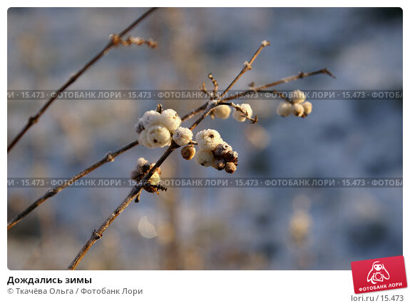 Дождались зимы, фото № 15473, снято 21 декабря 2006 г. (c) Ткачёва Ольга / Фотобанк Лори