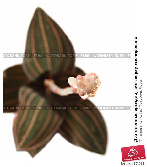 Драгоценные орхидеи, вид сверху, изолировано, фото № 87961, снято 25 сентября 2007 г. (c) Tamara Kulikova / Фотобанк Лори