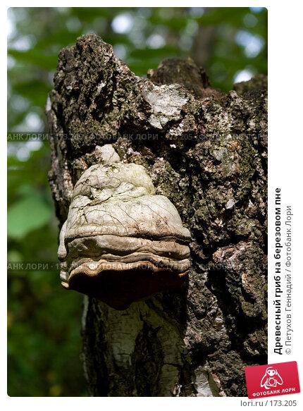 Древесный гриб на березовом пне, фото № 173205, снято 8 июля 2007 г. (c) Петухов Геннадий / Фотобанк Лори