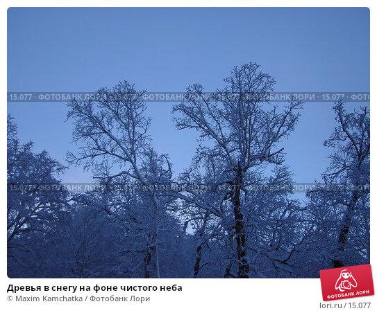 Древья в снегу на фоне чистого неба, фото № 15077, снято 12 декабря 2006 г. (c) Maxim Kamchatka / Фотобанк Лори