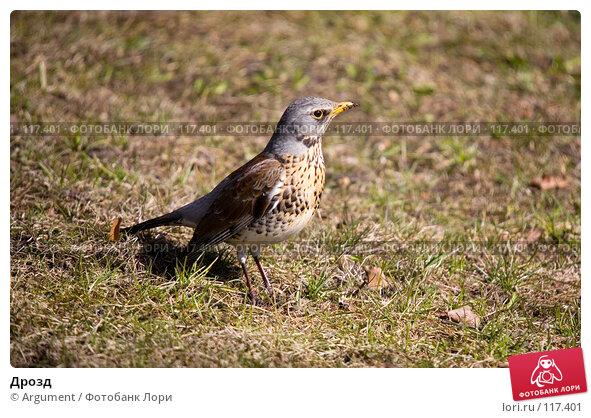 Дрозд, фото № 117401, снято 12 апреля 2007 г. (c) Argument / Фотобанк Лори
