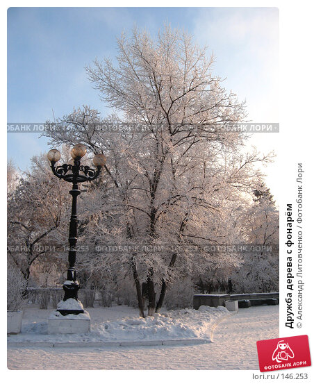 Дружба дерева с фонарём, фото № 146253, снято 8 декабря 2007 г. (c) Александр Литовченко / Фотобанк Лори