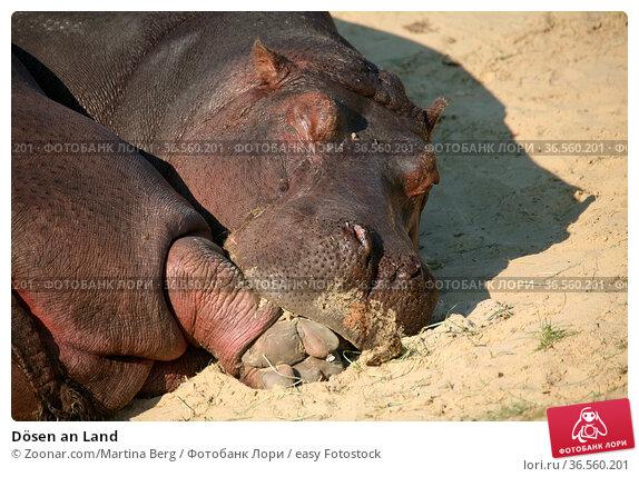 Dösen an Land. Стоковое фото, фотограф Zoonar.com/Martina Berg / easy Fotostock / Фотобанк Лори