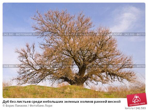 Купить «Дуб без листьев среди небольших зеленых холмов ранней весной», фото № 242593, снято 29 марта 2008 г. (c) Борис Панасюк / Фотобанк Лори