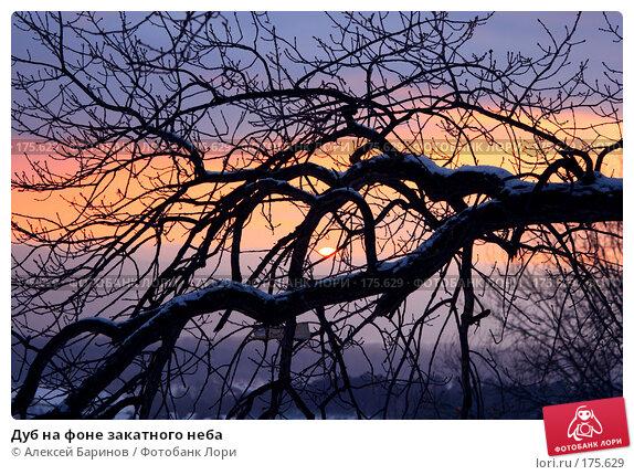 Дуб на фоне закатного неба, фото № 175629, снято 7 января 2008 г. (c) Алексей Баринов / Фотобанк Лори