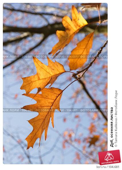 Купить «Дуб, осенняя листва», фото № 104681, снято 24 апреля 2018 г. (c) Tamara Kulikova / Фотобанк Лори