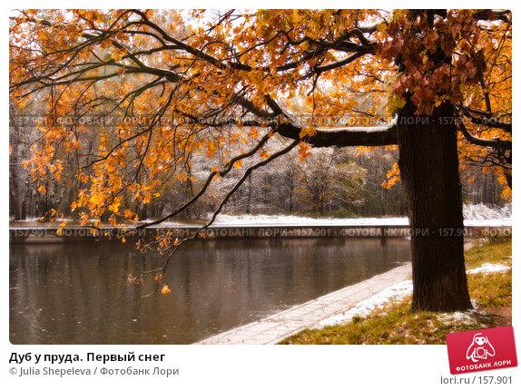 Дуб у пруда. Первый снег, фото № 157901, снято 16 октября 2007 г. (c) Julia Shepeleva / Фотобанк Лори
