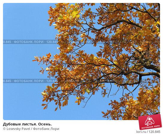Дубовые листья. Осень., фото № 120845, снято 2 октября 2005 г. (c) Losevsky Pavel / Фотобанк Лори