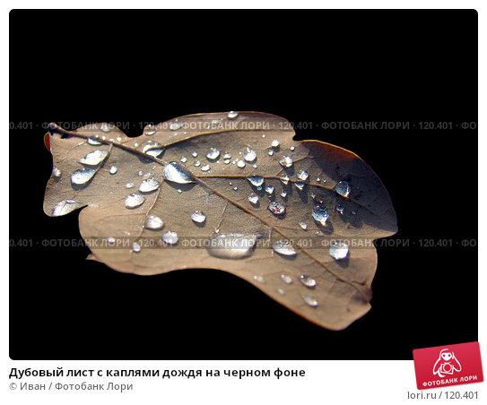 Дубовый лист с каплями дождя на черном фоне, фото № 120401, снято 28 октября 2007 г. (c) Иван / Фотобанк Лори