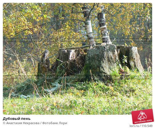 Купить «Дубовый пень», фото № 110549, снято 30 сентября 2007 г. (c) Анастасия Некрасова / Фотобанк Лори