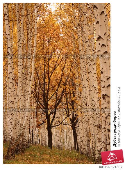 Дубы среди берез, фото № 121117, снято 14 октября 2007 г. (c) Алексей Баринов / Фотобанк Лори