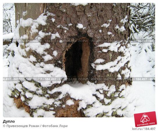 Дупло, фото № 184497, снято 23 января 2008 г. (c) Привезенцев Роман / Фотобанк Лори