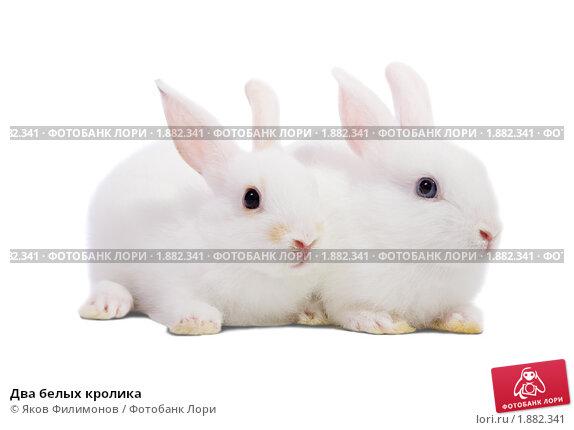 Купить «Два белых кролика», фото № 1882341, снято 31 июля 2010 г. (c) Яков Филимонов / Фотобанк Лори