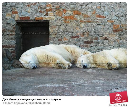 Два белых медведя спят в зоопарке, фото № 33893, снято 24 марта 2007 г. (c) Ольга Хорькова / Фотобанк Лори