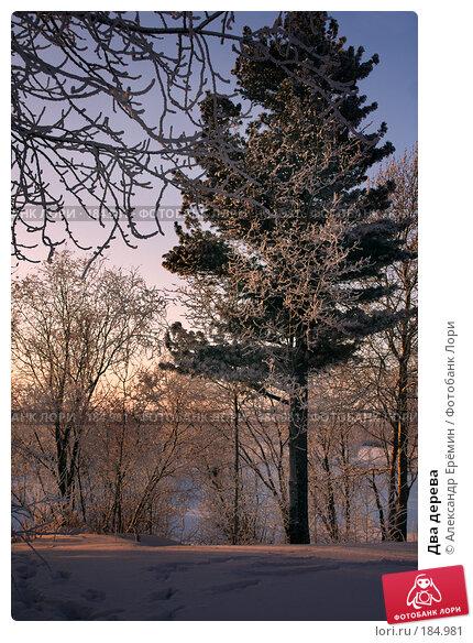 Два дерева, фото № 184981, снято 17 января 2008 г. (c) Александр Ерёмин / Фотобанк Лори