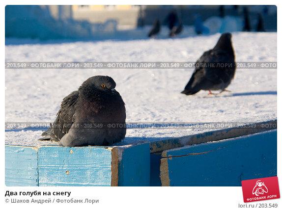 Купить «Два голубя на снегу», фото № 203549, снято 7 февраля 2008 г. (c) Шахов Андрей / Фотобанк Лори
