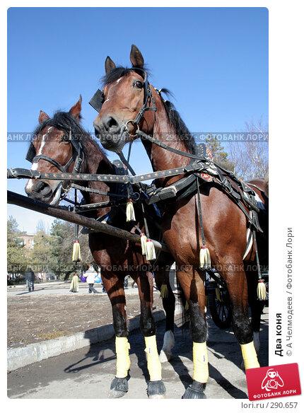 Купить «Два коня», фото № 290657, снято 18 февраля 2007 г. (c) A Челмодеев / Фотобанк Лори